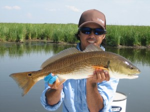 Duck pond redfish