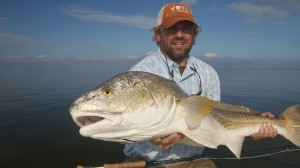 Floating Bull Redfish in Louisiana