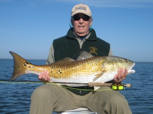 The Hords of Bull reds have arrived on the Oyster Flats