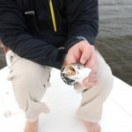 popper fishing for speckled trout