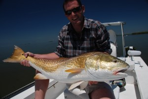 31.5 lb Louisiana redfish