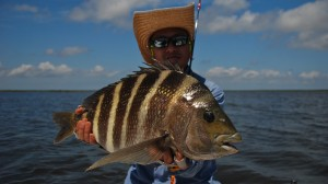 State Record Sheepshead on Fly