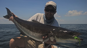 Summer Fly Fishing for Cobia