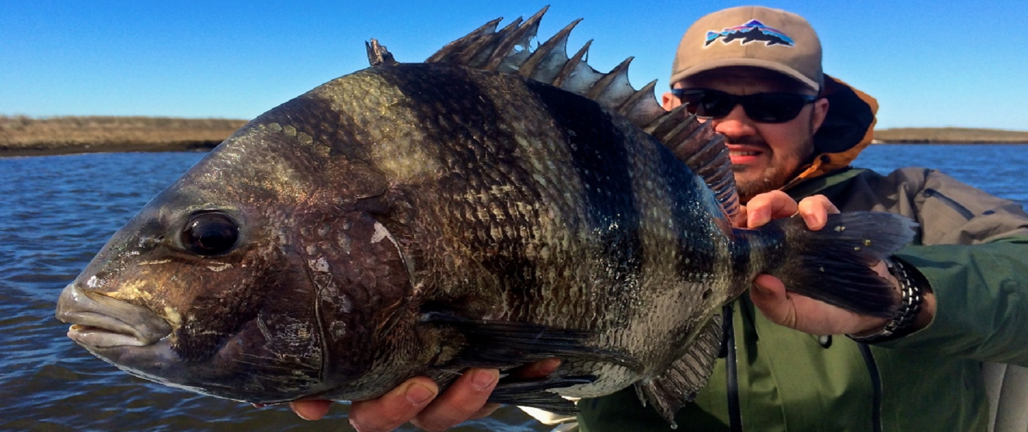 winter sheepshead fishing louisiana